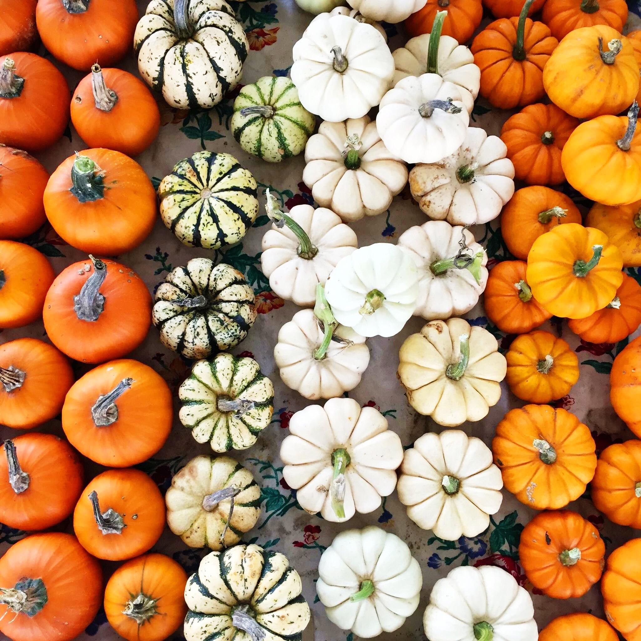 pumpkin spice body oil packaging - organic, cruelty free cosmetics